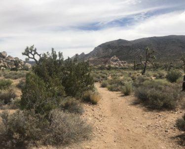 ジョシュア・ツリーでキャンプ初体験!2日目 ーRyan Ranch,  Cholla Cactus Garden ー